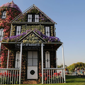Dubai Miracle Garden by Manoj Ojha - City,  Street & Park  City Parks ( dmg, winter, uae, #mydubai, dubai miracle garden, flowers )