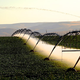 Irrigation by Vern Tunnell - Landscapes Prairies, Meadows & Fields (  )