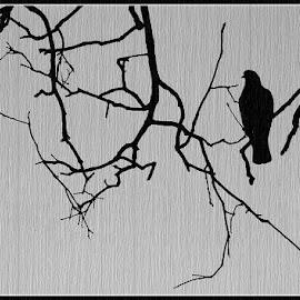 Lonely by Prasanta Das - Digital Art Animals ( pigeon, tree, lonely )