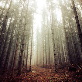 untitled by Zsolt Zsigmond - Landscapes Forests ( fog, fall, trees, forest, square )