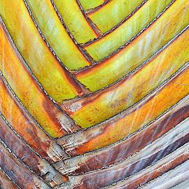 by Tupu Kuismin - Abstract Patterns