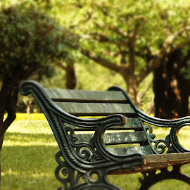 The lonely place by Darshan Salecha - City,  Street & Park  City Parks ( oldage, park, tree, bench, peace, tranquility )