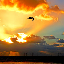 Explosion in the cloud by John Wain - Landscapes Beaches ( bird, sunset, liverpool, crosby beach, wind farm,  )