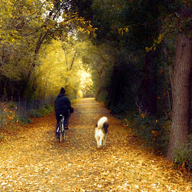 golden days of fall by Leslie Hunziker - City,  Street & Park  Neighborhoods ( seasons, creek, fall, path, trees, leaves, dog, walk, people )