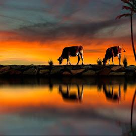 Beatuiful Morning by Rahul Phutane - Digital Art Animals ( water, rahulphutane, tree, morning, animal, colorful, mood factory, vibrant, happiness, January, moods, emotions, inspiration )