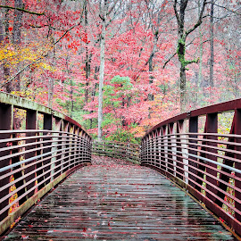 Cape Fear River Trail by Lou Plummer - City,  Street & Park  City Parks ( walking, autumn, color, fog, fall, leaves, rain, hiking,  )