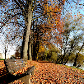 Fall colors by Bruno Brunetti - City,  Street & Park  City Parks ( cities, colors, straubing, fall, germany )