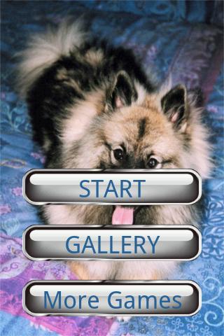 狗狗拼圖:荷蘭毛獅犬