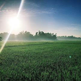 Ricefields early morning by Ryanneil Aoanan - Nature Up Close Gardens & Produce ( ricefields nature )