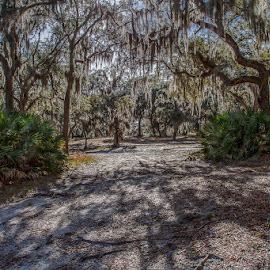 Southern Comfort by Rich Turner - Landscapes Forests ( palmetto plants, nature, hdr, manually-blended hdr, moss, off-road trails, tyndall afb, shade, landscape, live oaks )