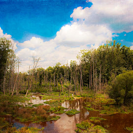 Mother Nature's Beauty by Diane Johnson - Landscapes Travel ( clouds, water, blue sky, sky, green, trees, stumps )