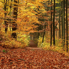 Autumn in the forest by Milan Hořejší - Landscapes Forests ( autumn, beautiful, forest, october, leaves, sun )