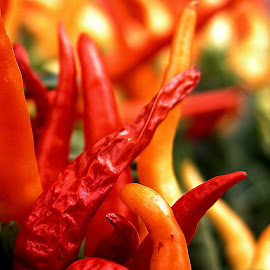 Wrinkled Pepper by Robin Morgan - Nature Up Close Gardens & Produce ( wrinkles, orange, peppers, red, gardening )