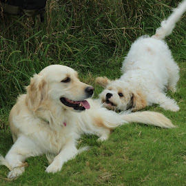 Play with me? by Chris Knowles - Animals - Dogs Playing