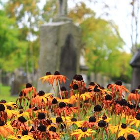 by Sandy Darnstaedt - City,  Street & Park  Cemeteries (  )