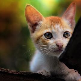 by Subir Majumdar - Animals - Cats Portraits