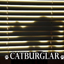 Catburglar by Nancy Lowrie - Typography Captioned Photos