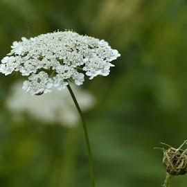 by Subinoy Das - Nature Up Close Gardens & Produce