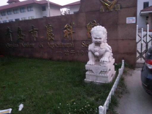青岛农科院狮子