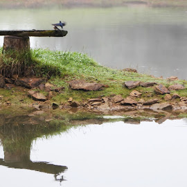 Early morning reflection by Maz Tissink - Nature Up Close Water ( water, misty )
