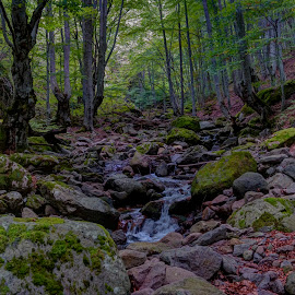 Frakto by Stratos Lales - Landscapes Forests ( stream, trees, leaves, eater, rocks )