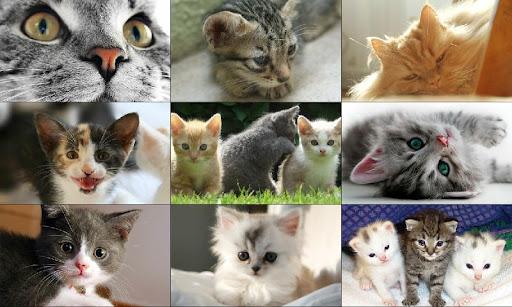 免費下載解謎APP|プッシーキャット、子猫、猫のパズル app開箱文|APP開箱王