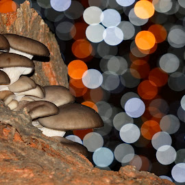 Forest musrooms by Alah Ja Ja Bin - Nature Up Close Mushrooms & Fungi ( colorful, forest mushrooms, forest, fungus, bokeh, close up, photography, colours, colour, lights, fungi, nature, color, nature up close, natural, closeup, mushrooms )