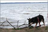 Tamy rettet einen Ast aus dem See *g*