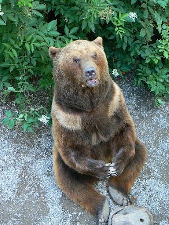 Obiective turistice Elvetia: ursul simbol Bern