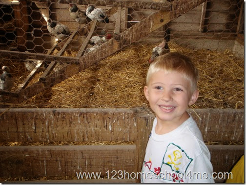 Meeting the chickens on a homeschool farm fieldtrip