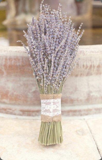 lavender red hill lavender farm3 imbue