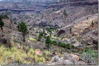 6960 Chira-Cruz Grande(Barranco Las Tederas)