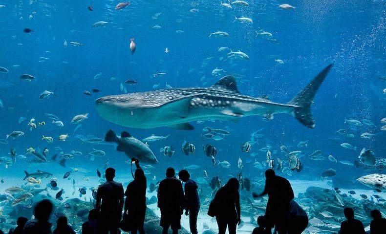Georgia Aquarium The Largest