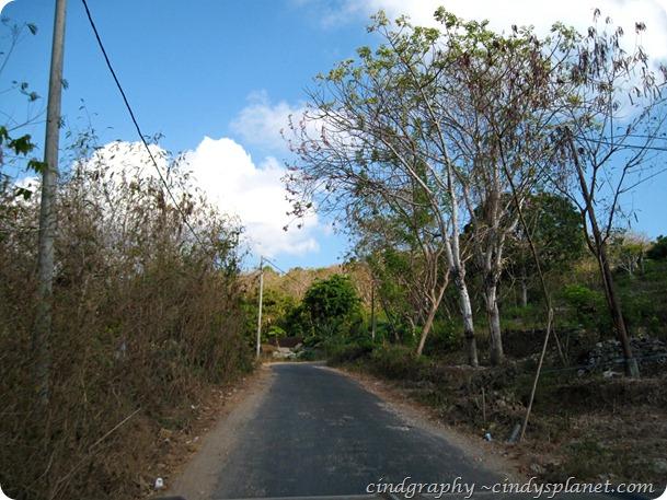 Road to Mangrove