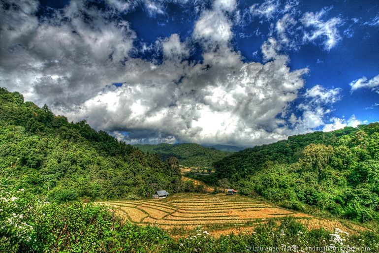 Rice paddies Doi Inthanon