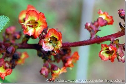 668 Cruz Llanos-Utiaca(Bella risco o Fistulera)