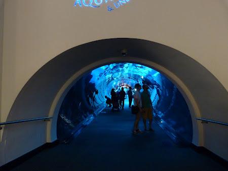 Obiective turistice Dubai: Tunelul de sub acvariu