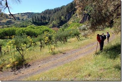 8165 Volcán Hondo Fagajesto(Llano Galeote)