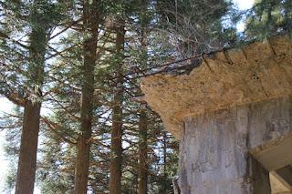 バッチャープラント跡の角