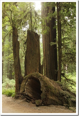 110714_Jedediah_Smith_Redwood_SP_51