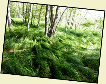 01c - Jesup Path - Beautiful Grasses