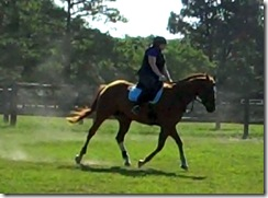 Solo Canter Warmup