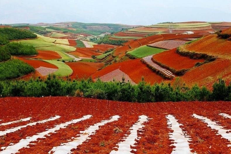 red desert soil
