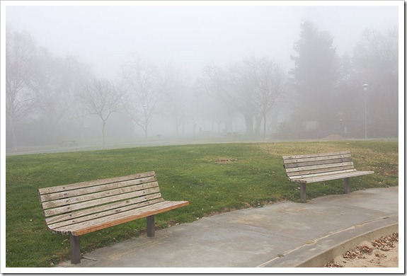 111220_fog_benches
