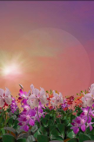 Orchids Free Live Wallpaper- screenshot