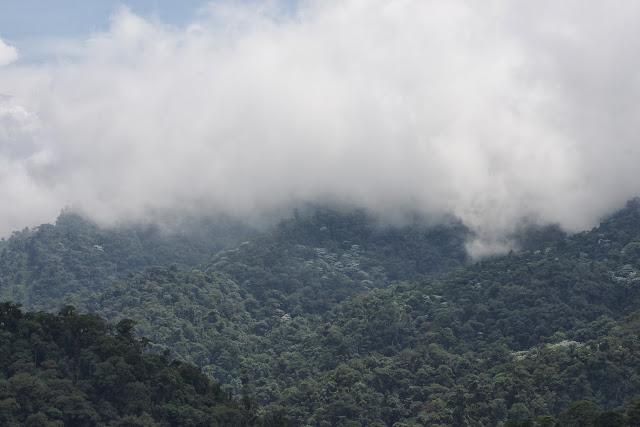 Forêt des nuages, environs de Los Cedros, 1400 m, Montagnes de Toisan, Cordillère de La Plata (Imbabura, Équateur), 18 novembre 2013. Photo : J.-M. Gayman