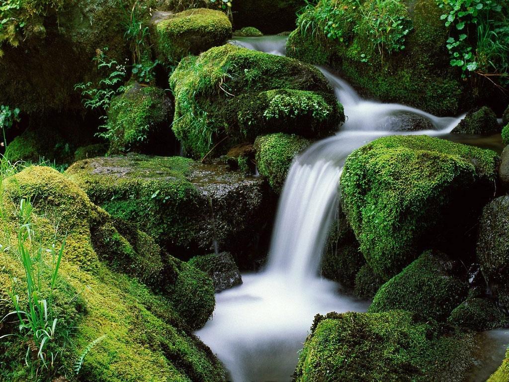 Frases De Preservação Da Natureza Quotes Links