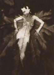 Albert Renger-Patzsch - Bosque de hayas - 1936