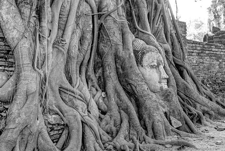 Wat Mahathat Buddhakopf Baum Ayutthaya Thailand