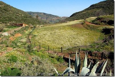 5137 Cruz Llanos-Lomo Carbonero